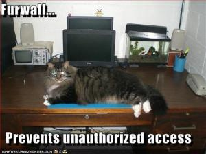 funny-pictures-furwall-prevents-unauthorized-access